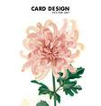beige chrysanthemum flower daisy bloom big flower vector image vector image