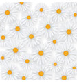 chamomile summer flower background camomile vector image