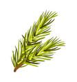 green bushy spruce twig vector image vector image