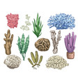hand drawn seaweeds and corals sea reef vector image vector image