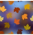 Leaves of maple on blurred background autumn vector image