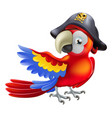 pirate parrot vector image