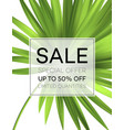 sale banner or poster with palm leaves and jungle vector image vector image