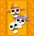 skulls traditional to celebrate day of the dead vector image