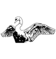 Swan with Outstretched Wings vector image vector image