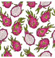 dragon fruit seamless doodle pattern in color vector image