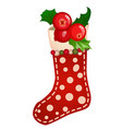 hanging colored sock textured polka dot with berry vector image vector image