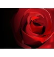 Red rose on black vector image vector image