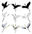 wild birds in flight animals in nature or in the vector image vector image
