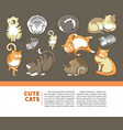 cats and cute kittens pets playing or posing vector image vector image