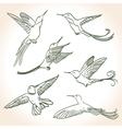 colibri vector image vector image