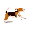 cute cool running beagle puppy dog vector image