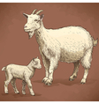engraving goat and kid retro vector image