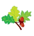leaves oak vector image