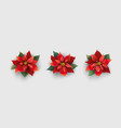 red christmas poinsettia flower isolated on white vector image vector image