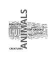 animals in australia text word cloud concept vector image vector image