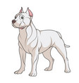 color a pit bull dog vector image vector image