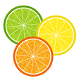 Colorful citrus slices set vector image vector image