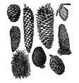 cones vector image vector image