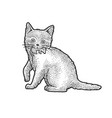 kitten with mouse in mouth sketch vector image