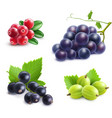 Realistic Berries Set vector image
