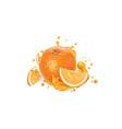 fresh orange and a splash fruit juice vector image vector image