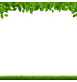 green grass and leaves border white background vector image vector image