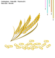 Rice with Carbohydrate Vitamin B9 B1 B3 vector image vector image