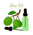 shea nut oil in bottlecartoon flat style vector image vector image