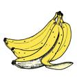 bananas vector image vector image