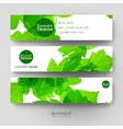 Beautiful banner template with autumn leaf vector image
