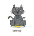 Bombay cat Cat character isolated on white vector image vector image