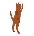 cat jump and beg food from owner spotted pet vector image