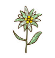 edelweiss flower icon alpine icon flat web vector image vector image