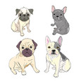 funny puppies of french bulldog funny french vector image vector image