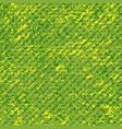 pattert-camo-salad-fish vector image