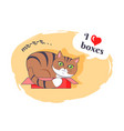 i love boxes beautiful kitty vector image