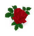 beautiful red rose with leaves isolated on white vector image