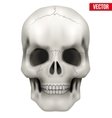 Human skull on isolated white vector image vector image