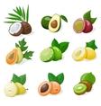 set exotic fruit vector image