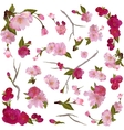 set of isolated spring flowers and branches vector image