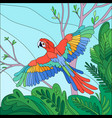 tropical bird parrot composition vector image vector image