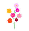 Assorted Cosmos Flowers on A White Background vector image