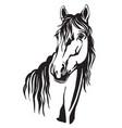 beautiful portrait line black contour horse vector image