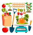 ecological vegetables gardening vegetable garden vector image