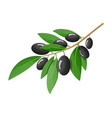 green olives branch isolated on white background vector image vector image