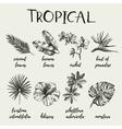 Hand drawn vintage retro sketch tropical plants vector image