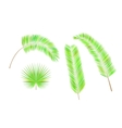 Set of colorful palm leaves vector image