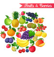background with fruits and berries vector image