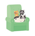 cute cats different breeds in sofa cartoon vector image vector image